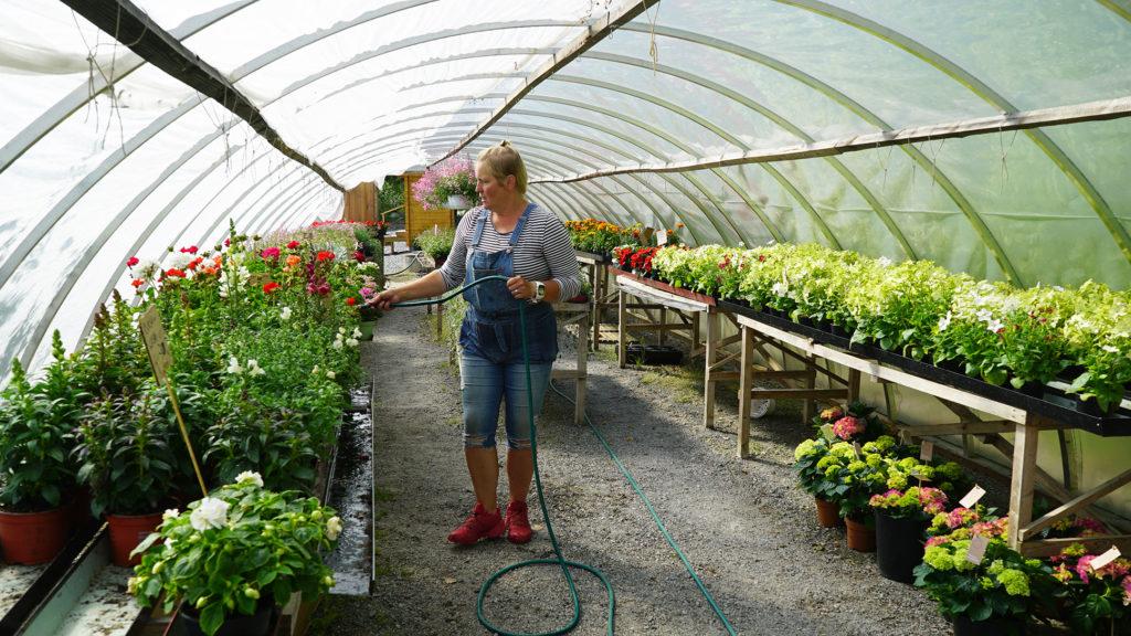 Kukkia kastellaan Mirrin ja MIntun puutarhassa.