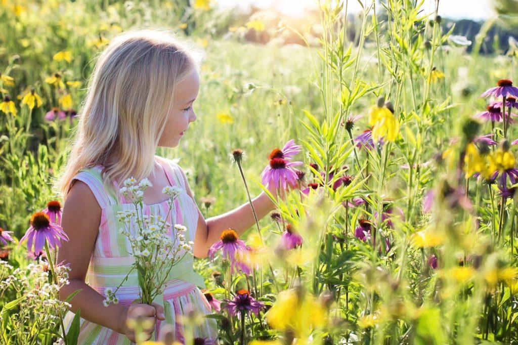 Pieni tyttö poimii luonnonkukkia niityllä.