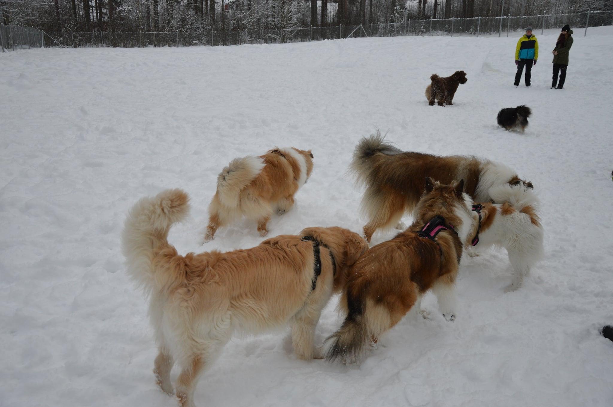 Sulkavan koirapuistossa tammikuussa 2021.